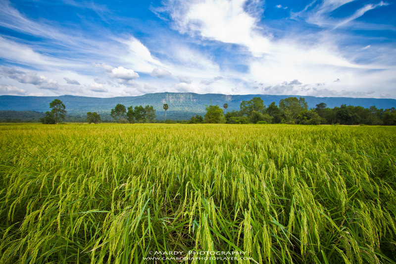 Photograph My beautiful country side! by Mardy Suong Photography on 500px