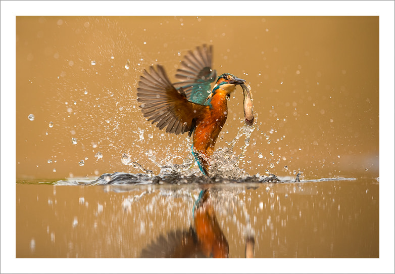 Photograph Splash! by Jules Cox on 500px