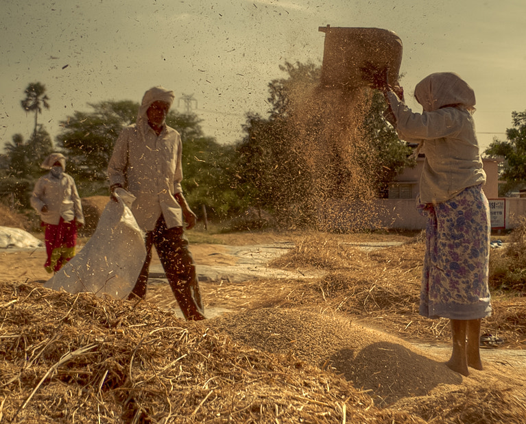 Photograph Winnowing the Chaff!! by swarat ghosh on 500px
