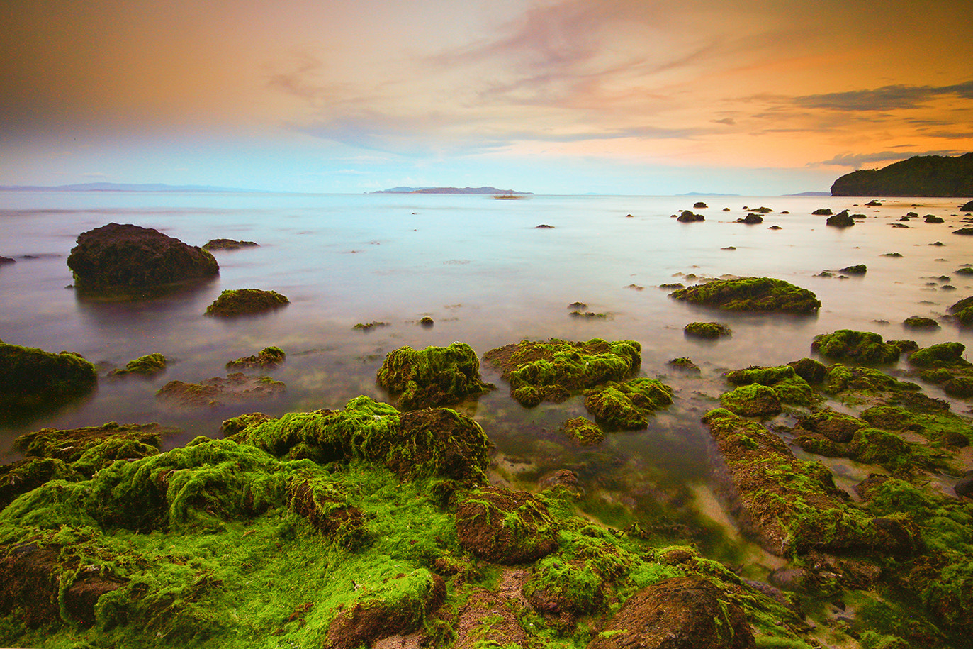 Photograph sea weeds by Raymond Recato on 500px