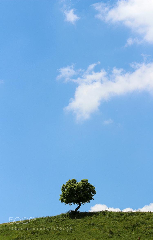 Photograph Small tree, huge world by Gabi Seidowsky on 500px