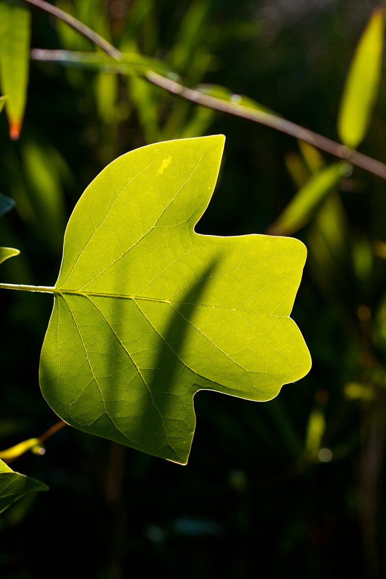 Photograph New Leaf by Robert Lee on 500px