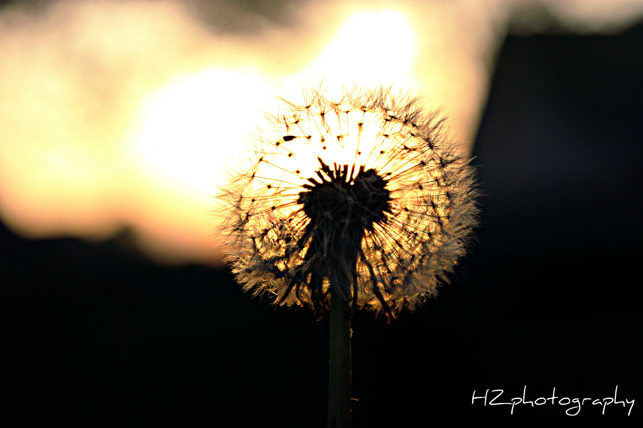 Photograph Sunlight wish by HidayahZ on 500px