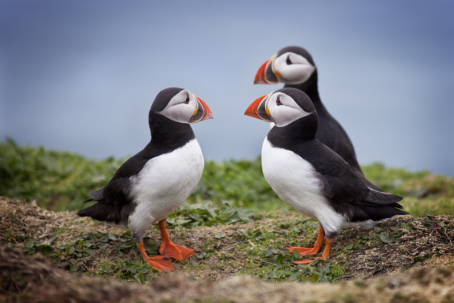 Photograph Hanging out with the guys by Alun Davies on 500px