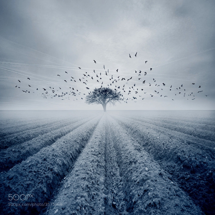 Photograph The Outsider  by Nicholas  Javed on 500px