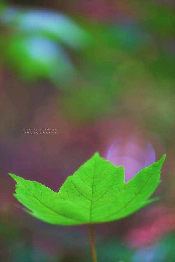 Photograph Levitate by Chirag Pradhan on 500px