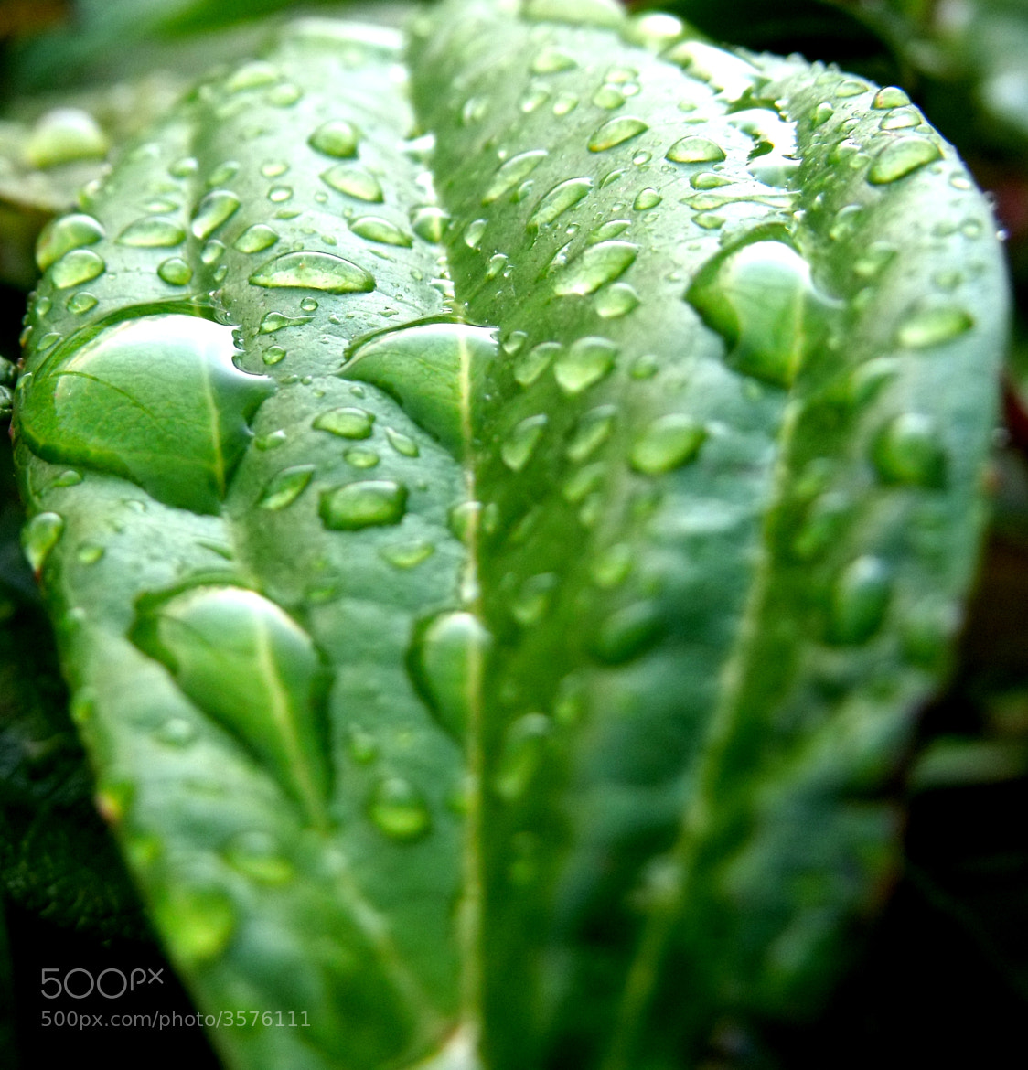 Photograph Raindrops by Liam . on 500px