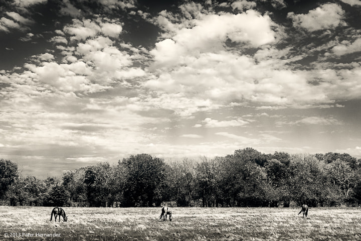 Photograph Grazers by Peter Hernandez on 500px
