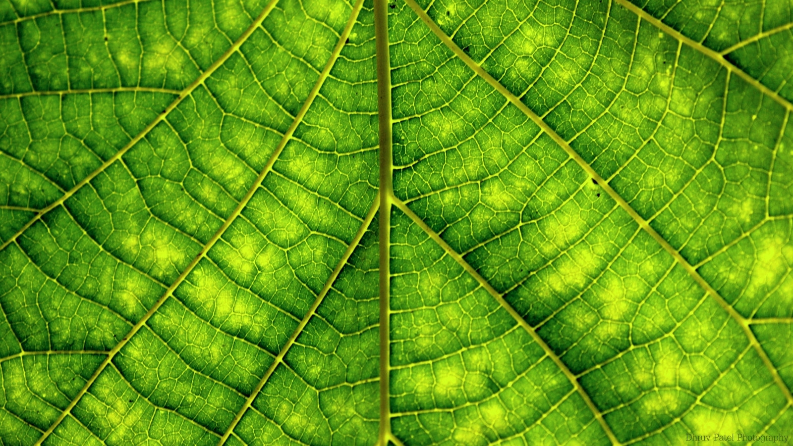 Photograph Leaf Pattern by Dhruv Patel on 500px