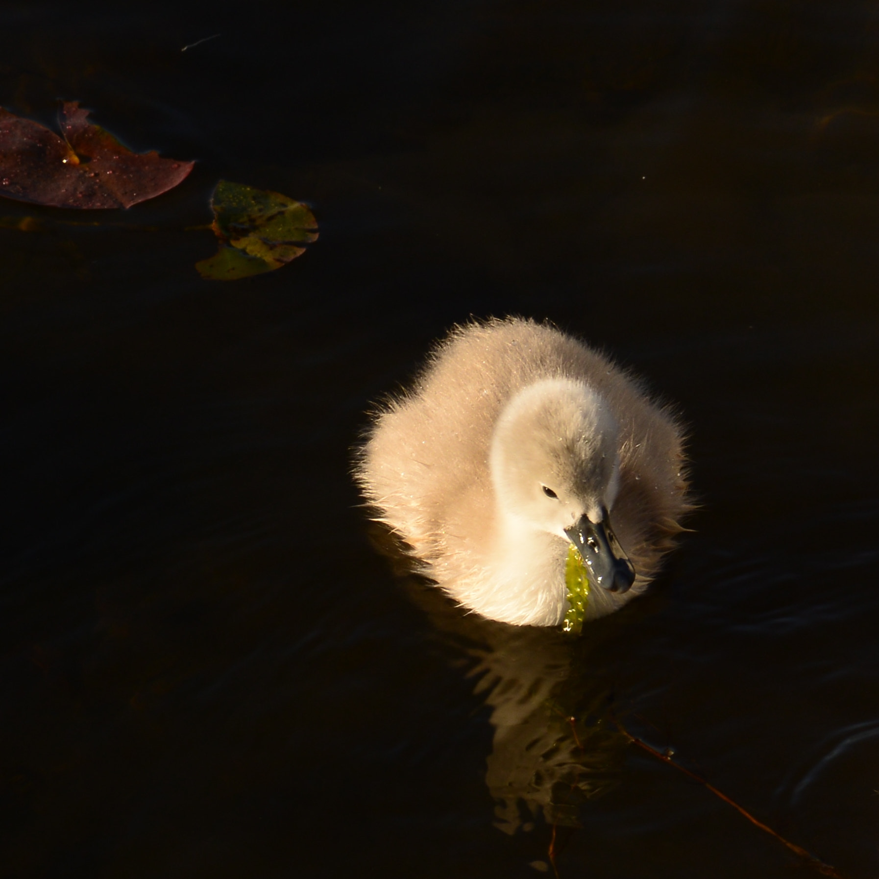 Photograph Ugly Duckling by John Mullinax on 500px