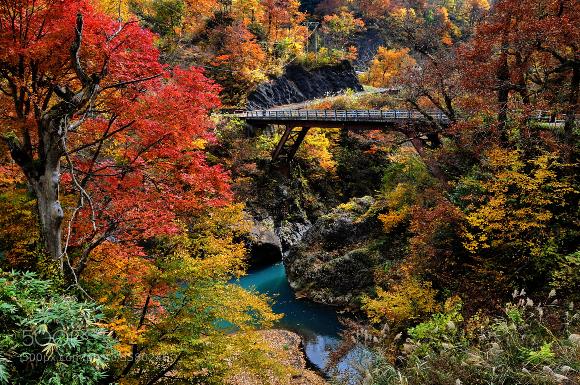 Photograph ★ Bridge in Autumn by KEN OHSAWA on 500px