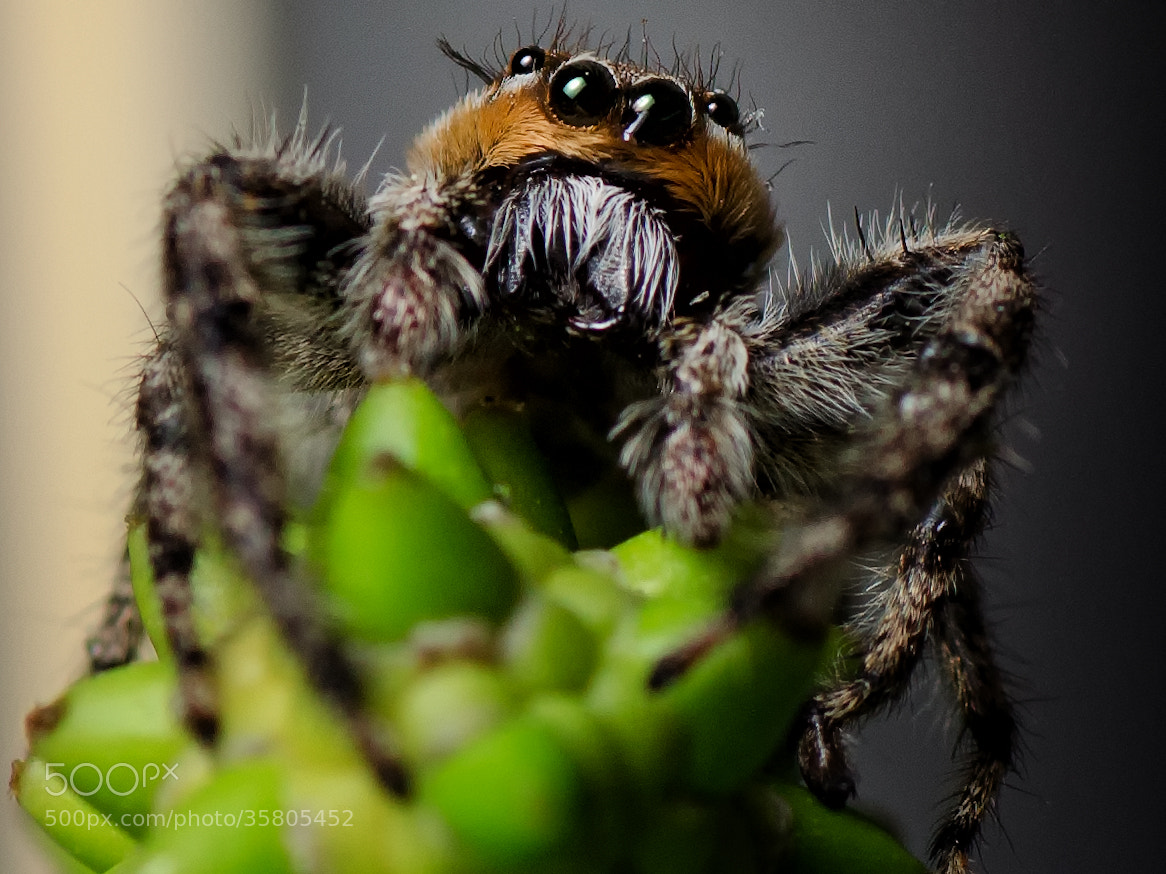 Photograph looking at you  by David  B on 500px