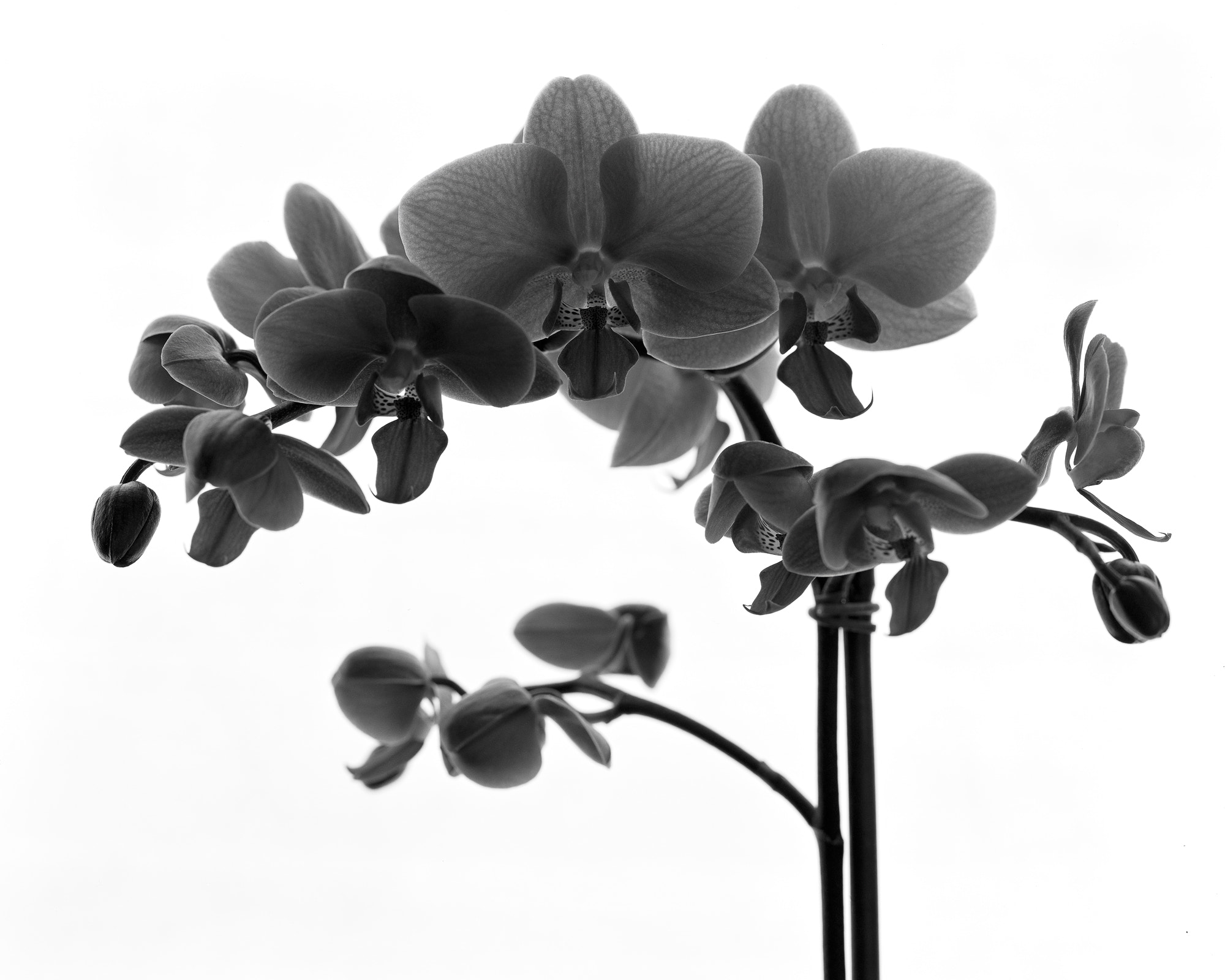 Photograph Orchids in Bloom by Tim Peare on 500px