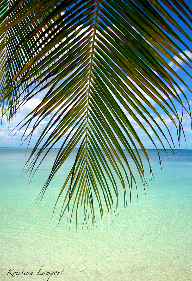 Photograph Palm Shore by Kristina Lamport on 500px