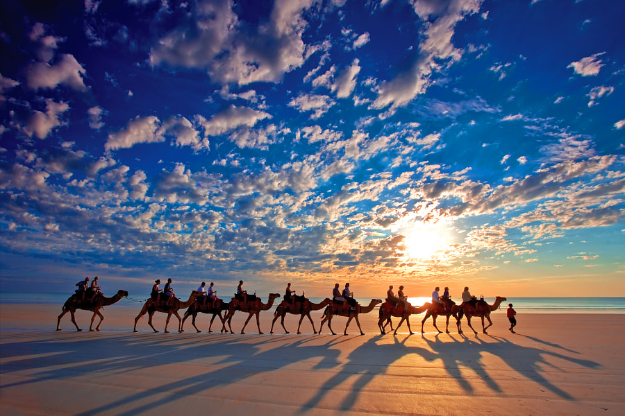 Photograph Cable Beach Camels by Wayne Bradbury on 500px
