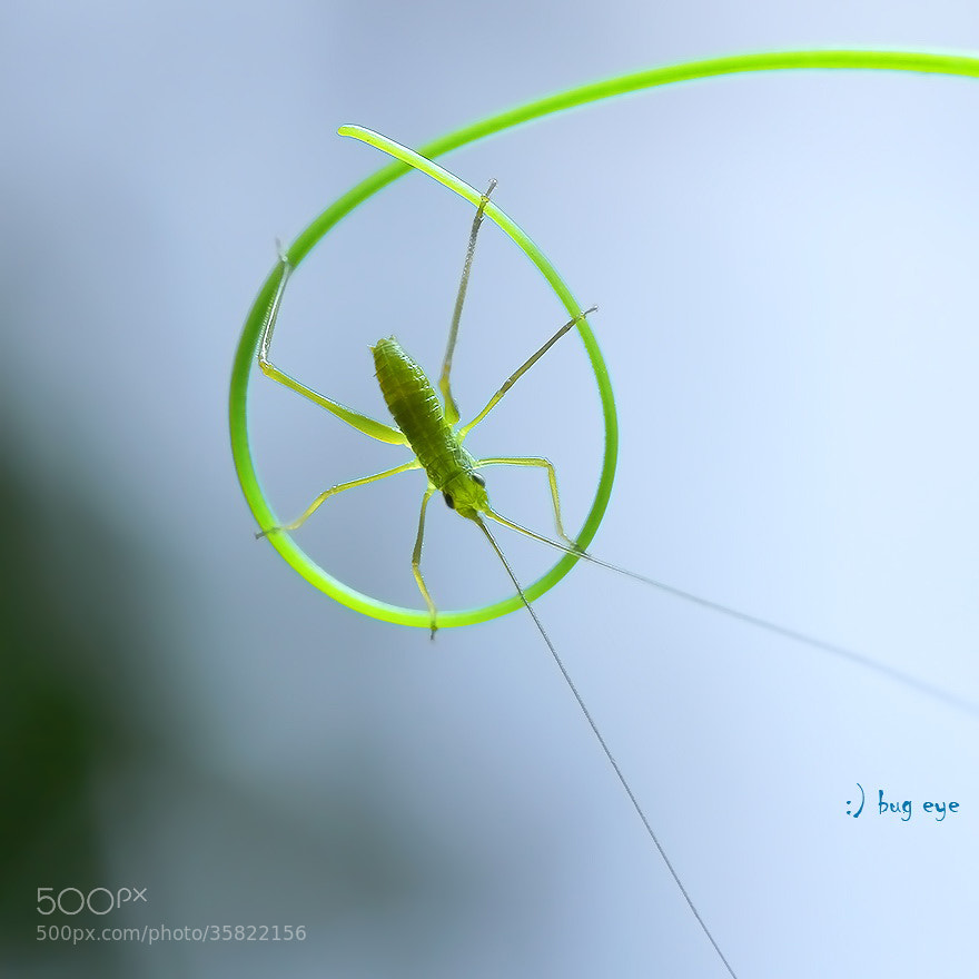 Photograph wheel play by bug eye :) on 500px