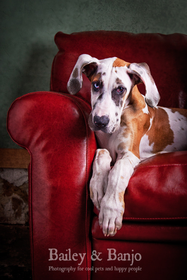 Photograph Dane on a couch by Julie Clegg on 500px