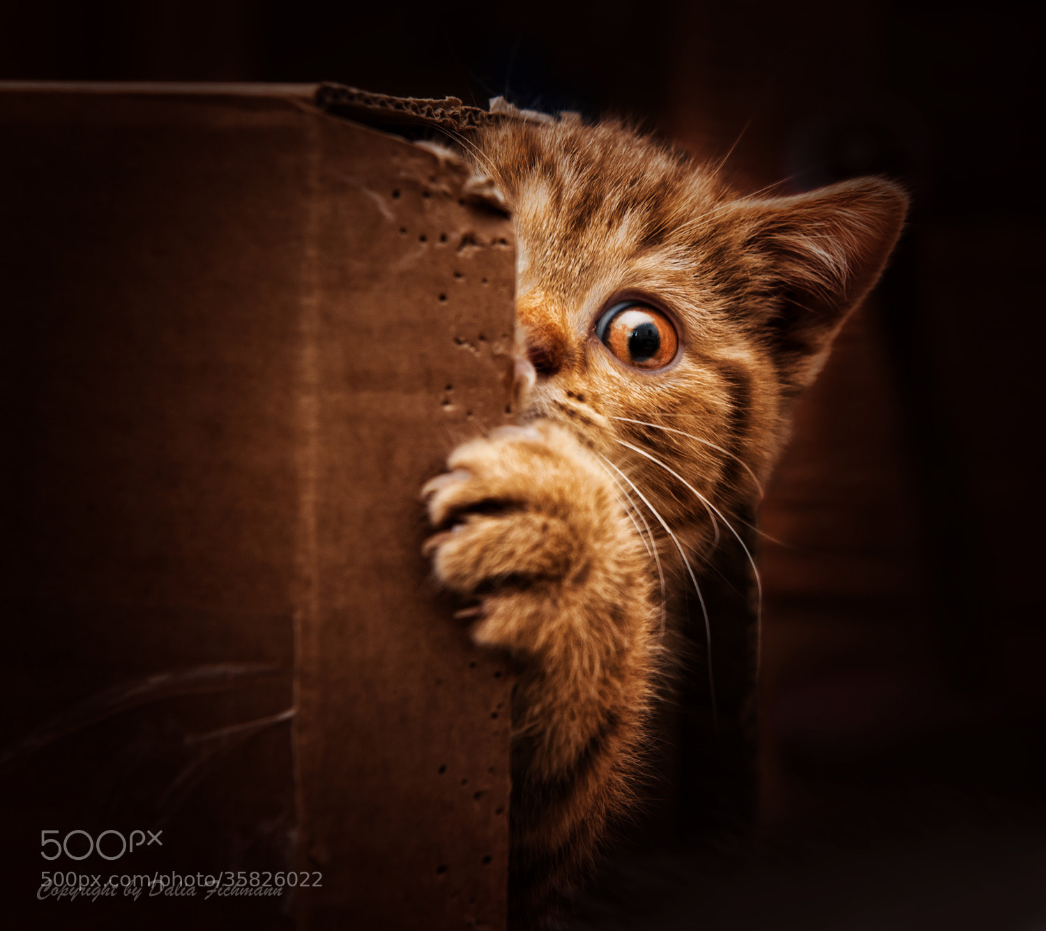 Photograph Who wants to play hide and seek by Dalia Fichmann on 500px