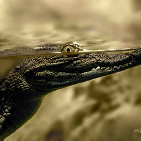 Portrait of a crocodile by Mikhail Levit (Mikhail_Levit)) on 500px.com