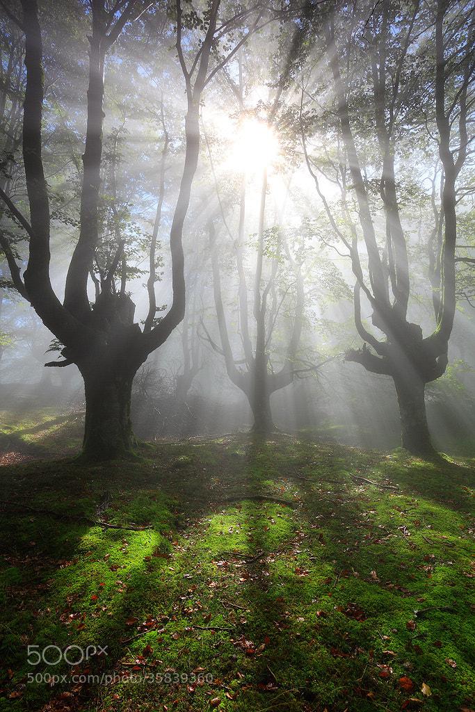 Photograph Urtzi Vera, De-light by Portfolio Natural  on 500px