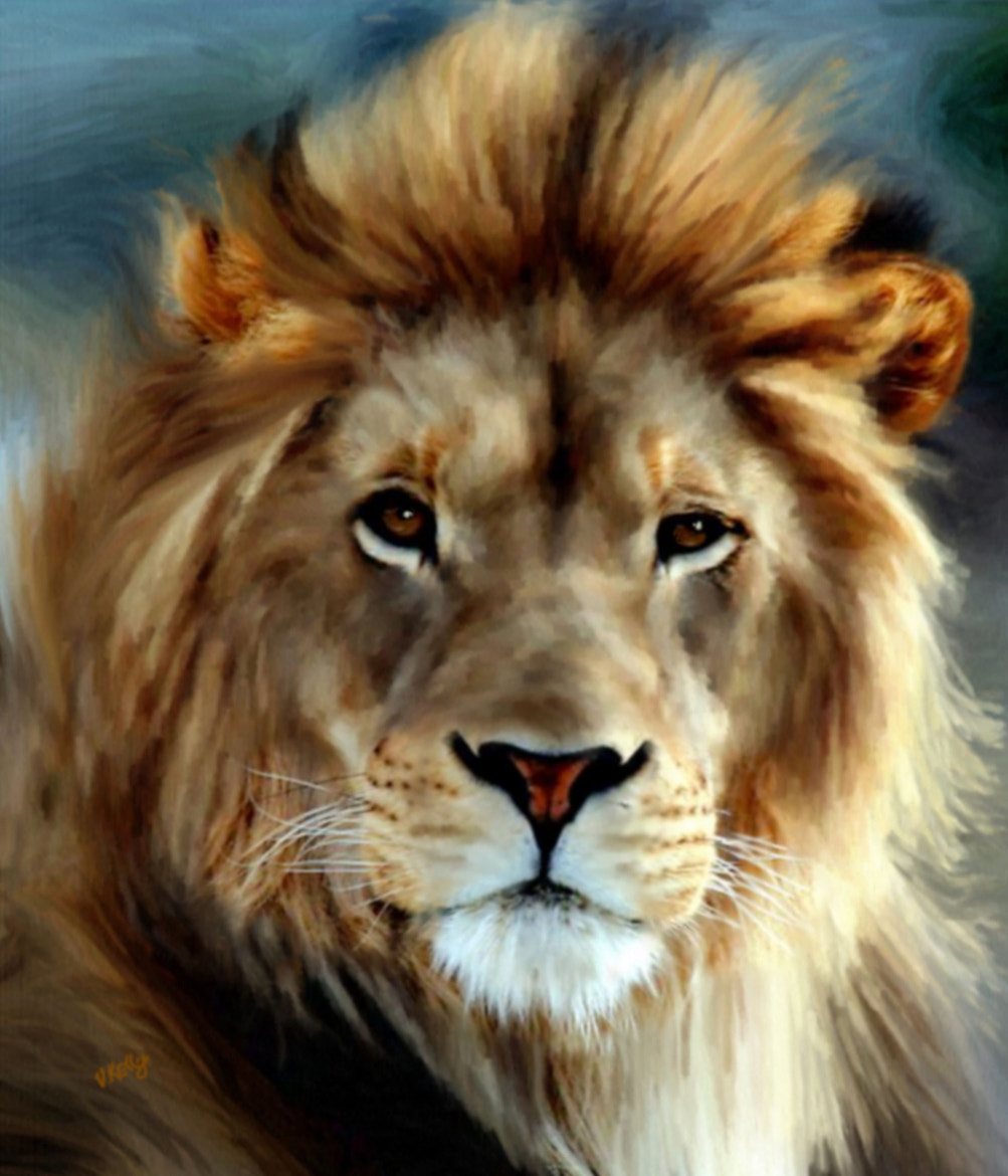Photograph Aslan by Valerie Anne Kelly on 500px