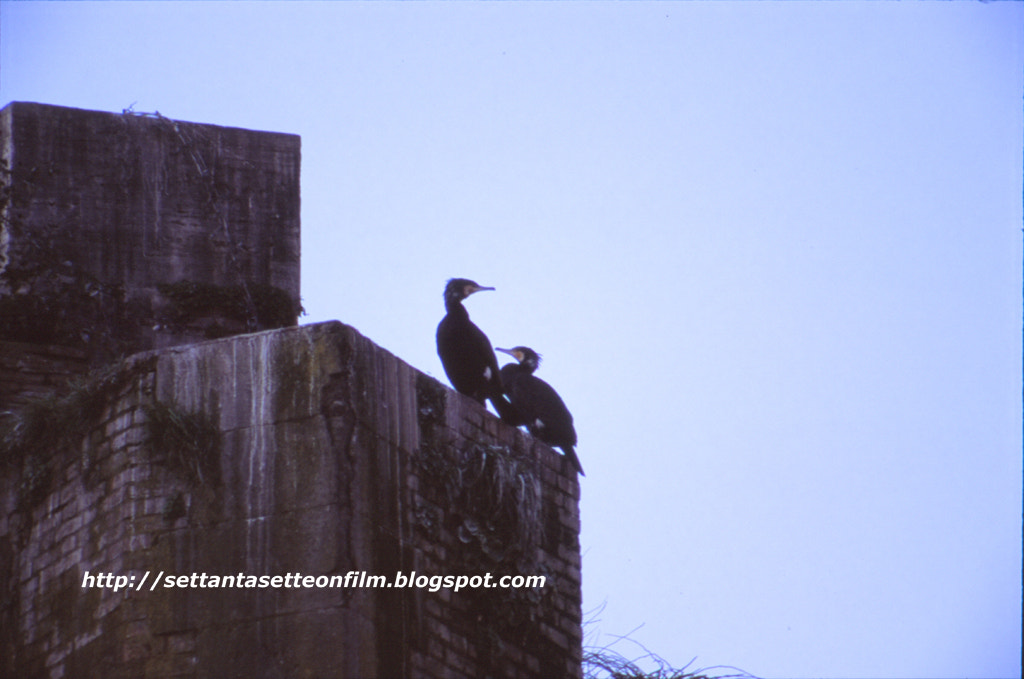 Photograph Cormorano a Ponte Rotto by SettantasetteOnFilm  on 500px