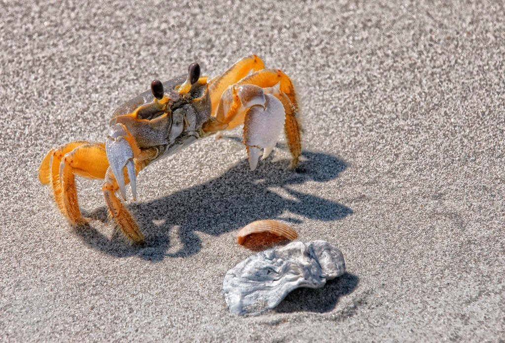 Photograph Ghost Crab by James Hilliard on 500px