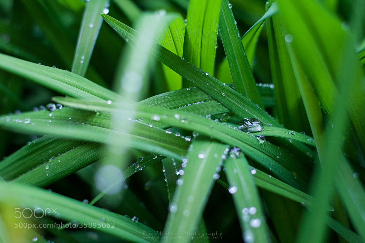 Photograph Boss Drop by Elias Näther on 500px
