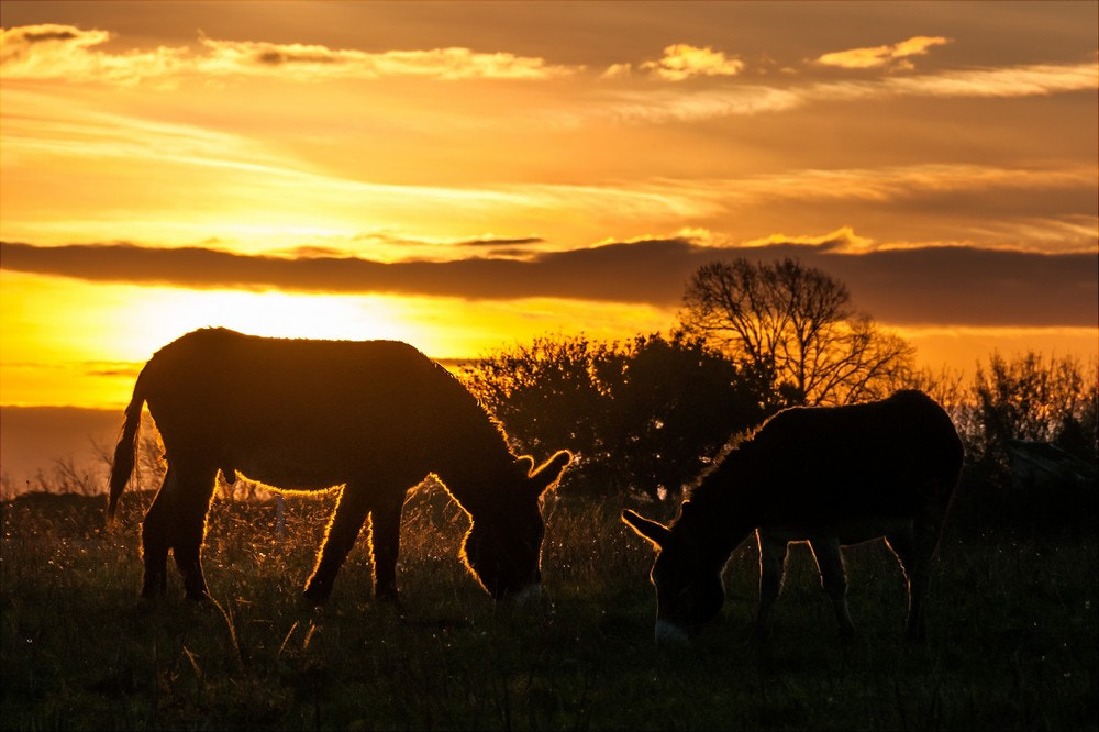 Photograph Solar donkeys by Pierre Nadler on 500px