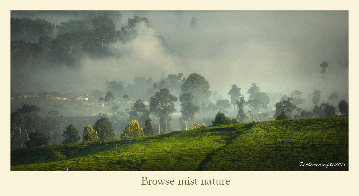 Photograph Browse mist nature by Saelanwangsa  on 500px