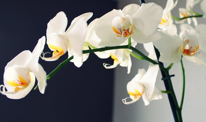 Photograph Orchids  by Aerni Adeline on 500px