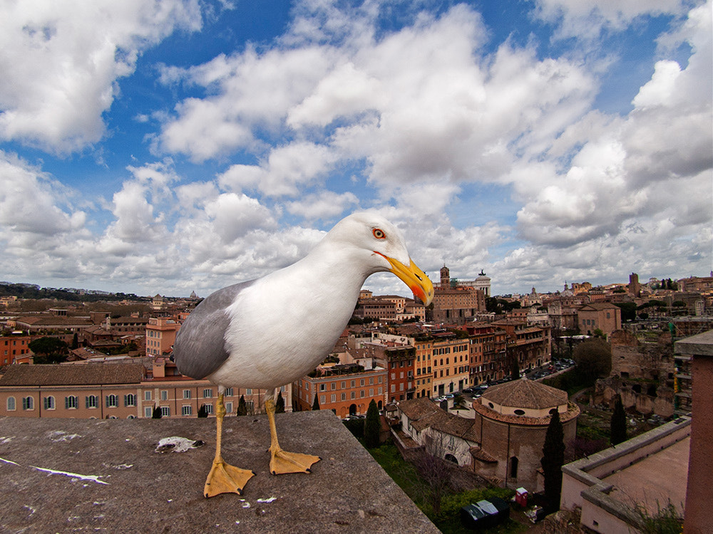 Photograph The guardian of Rome by Santiago Bañón on 500px