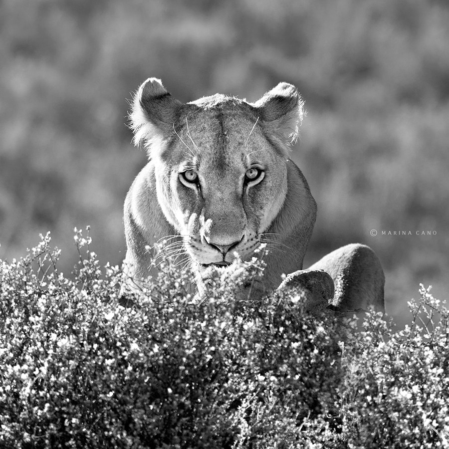 Photograph Africa by Marina Cano on 500px
