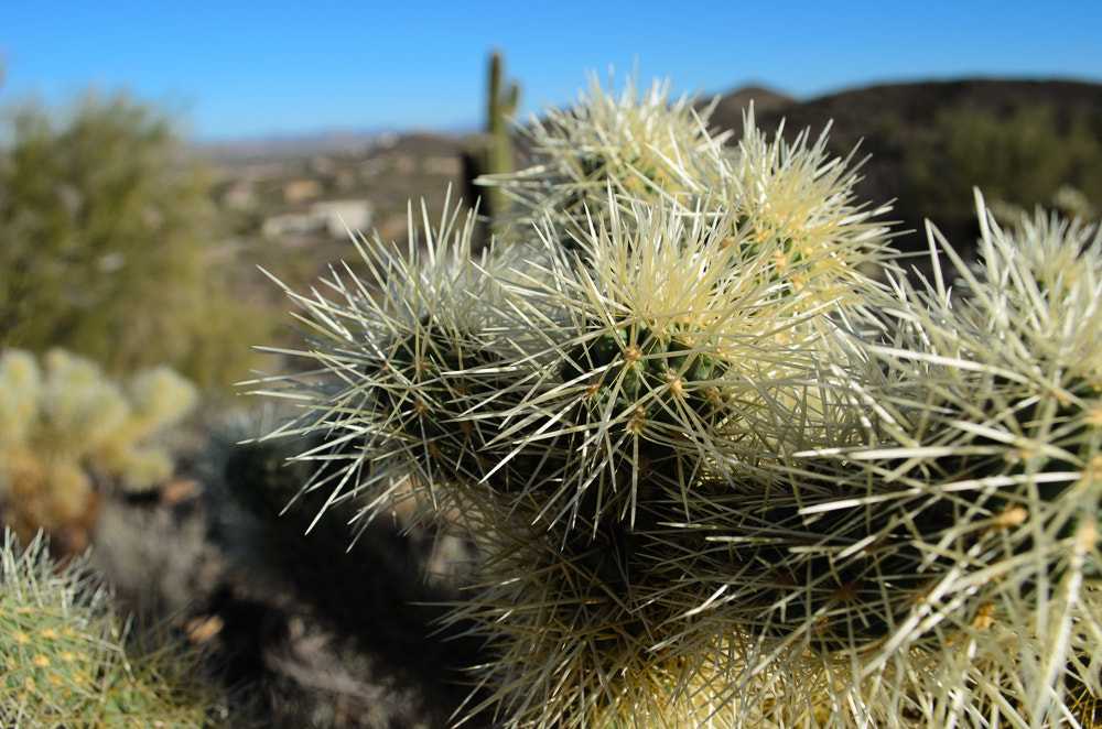 Photograph Cactus hike by Jeff Shewan on 500px