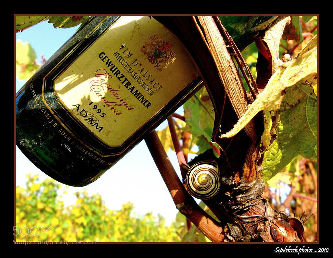 Photograph Gewurztraminer ... by Joseph Muller on 500px