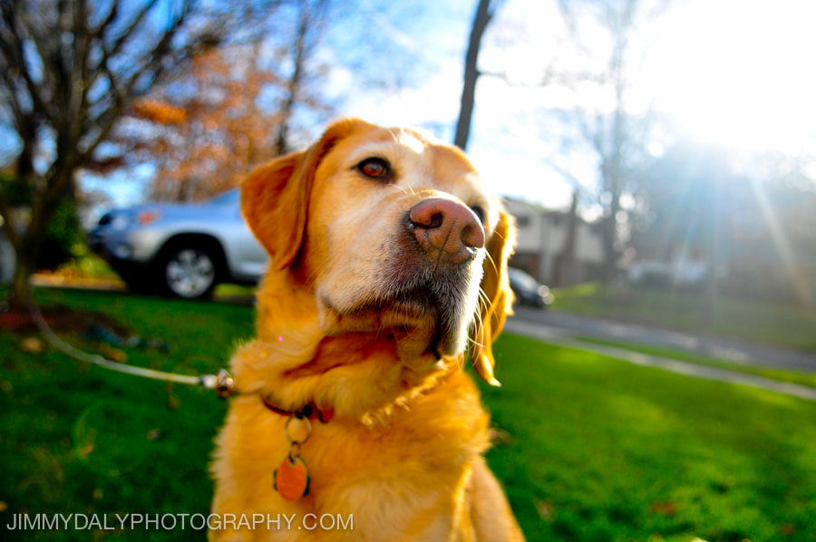 Photograph World's Best Dog by Jimmy Daly on 500px