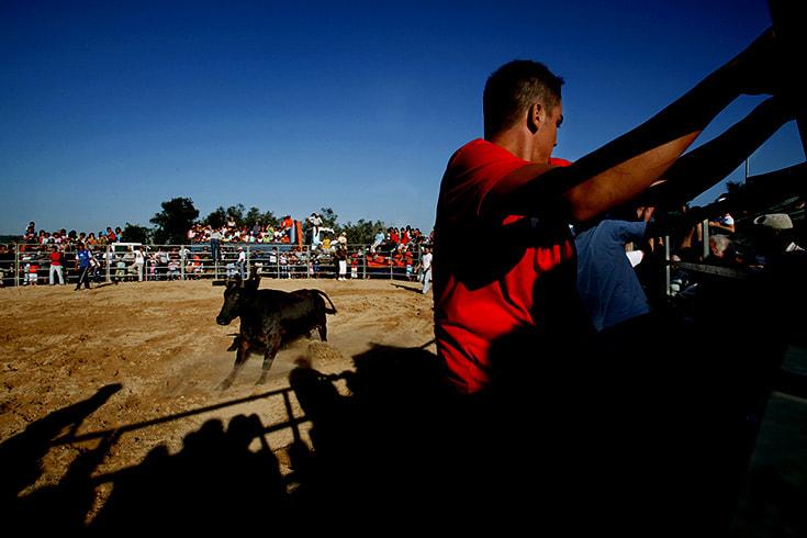 Bullfight fright
