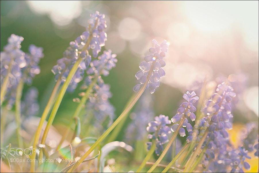 Photograph *spring by Nadine Lotze on 500px