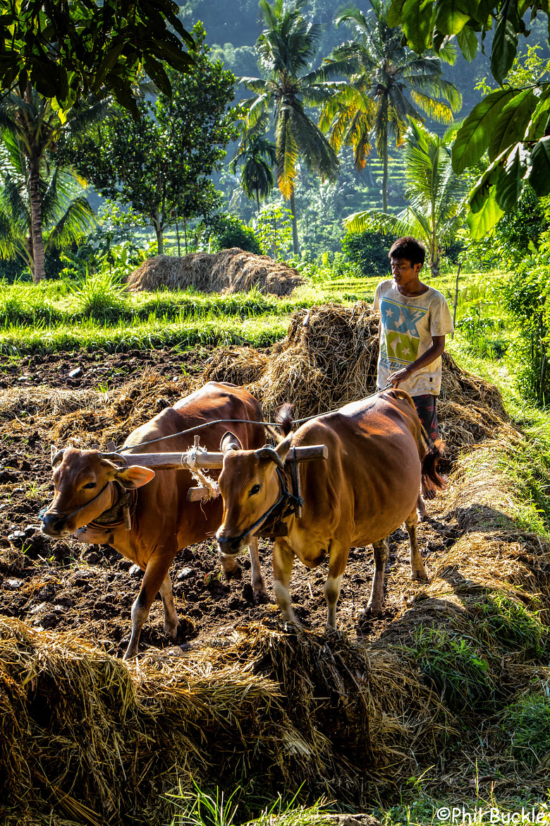 Photograph Bali Life by Phil Buckle on 500px