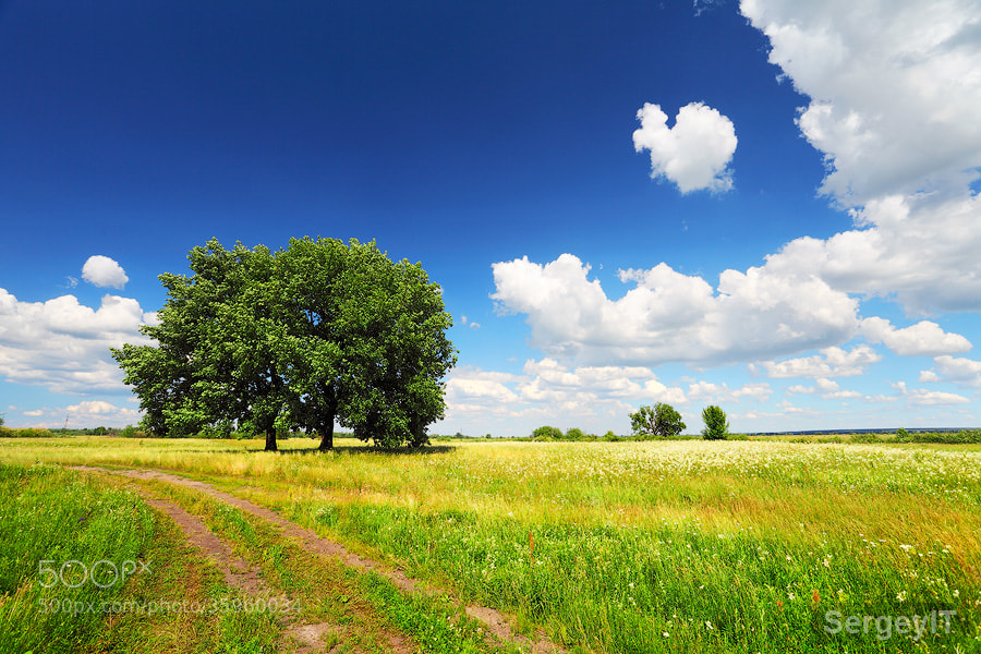 Photograph tree on summer field and fluffy clouds by Sergiy Trofimov on 500px