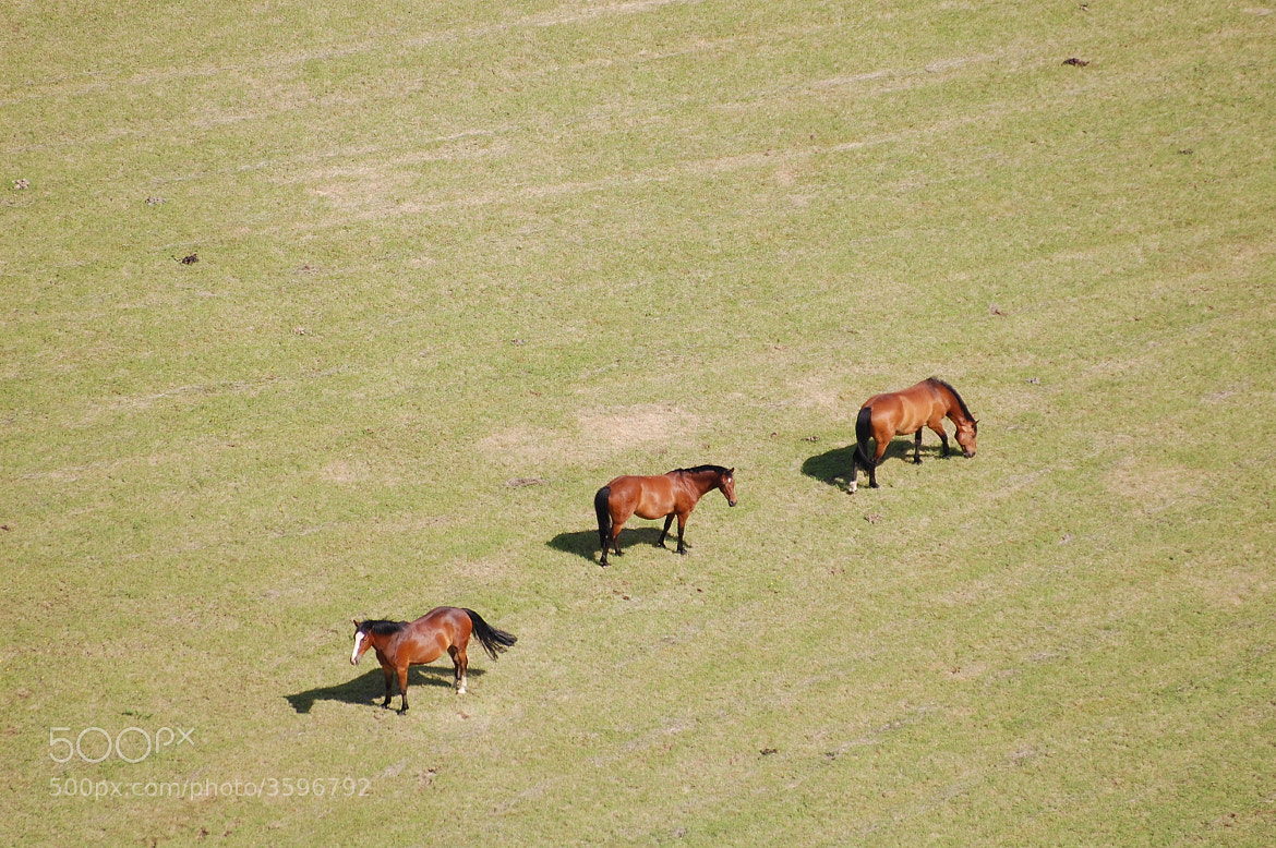 Photograph Horses by Andrea Hewlett on 500px