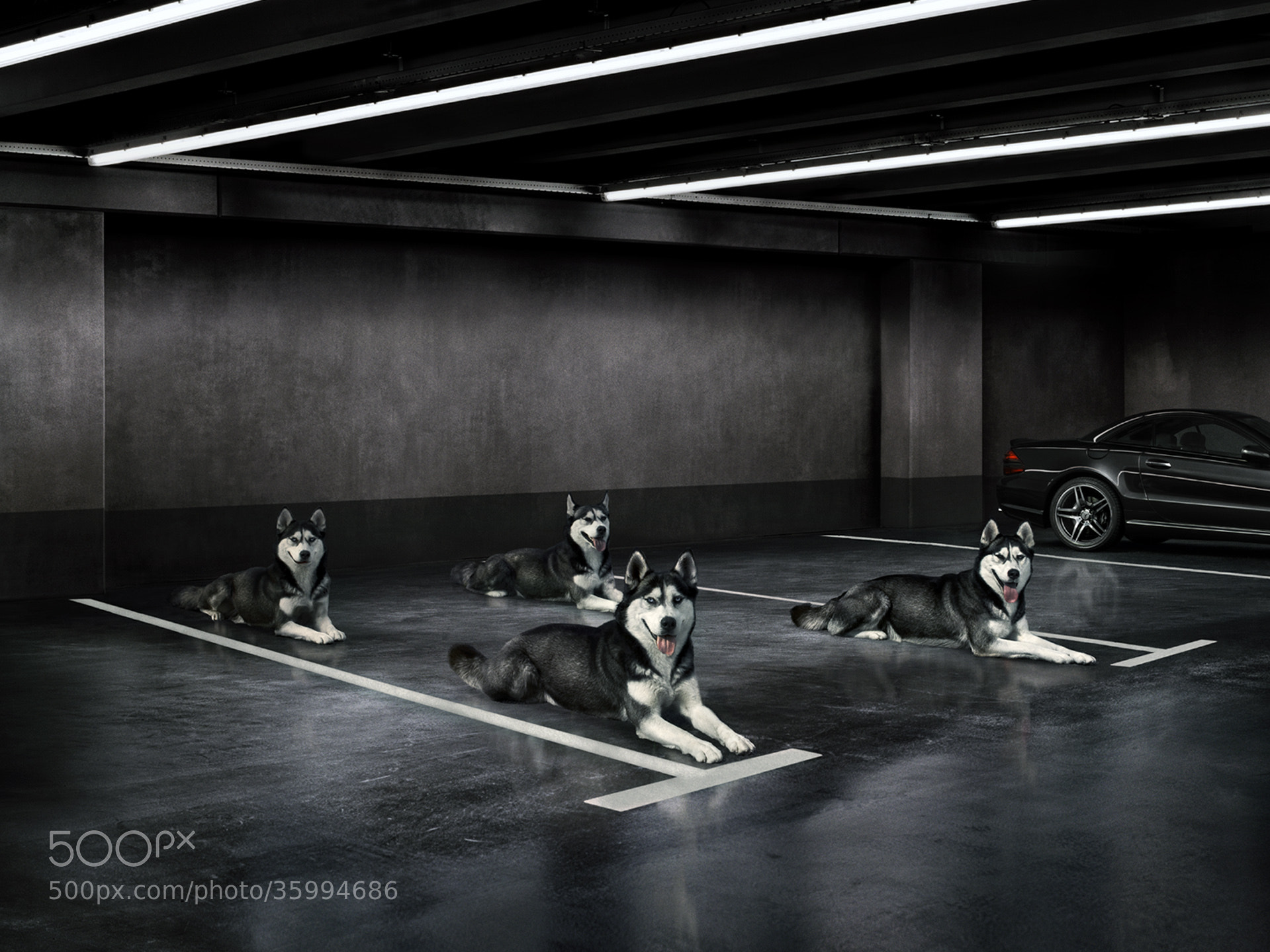 Photograph BMWolves by DDNA on 500px