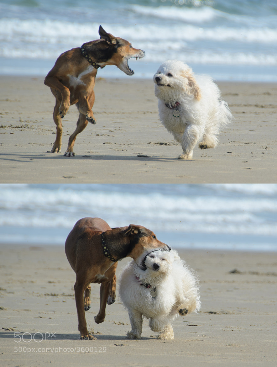 Photograph Dog Play by Jon Gray on 500px
