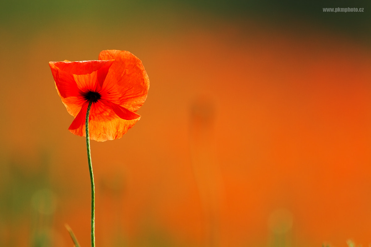 Photograph Red by Peter Krejzl on 500px
