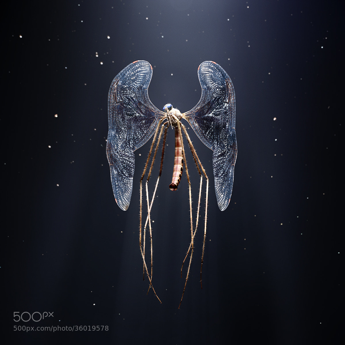 Photograph Mosquito by DDNA on 500px