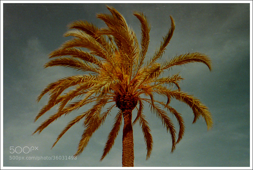 Photograph Palm by Anne Synnøve Harestad on 500px