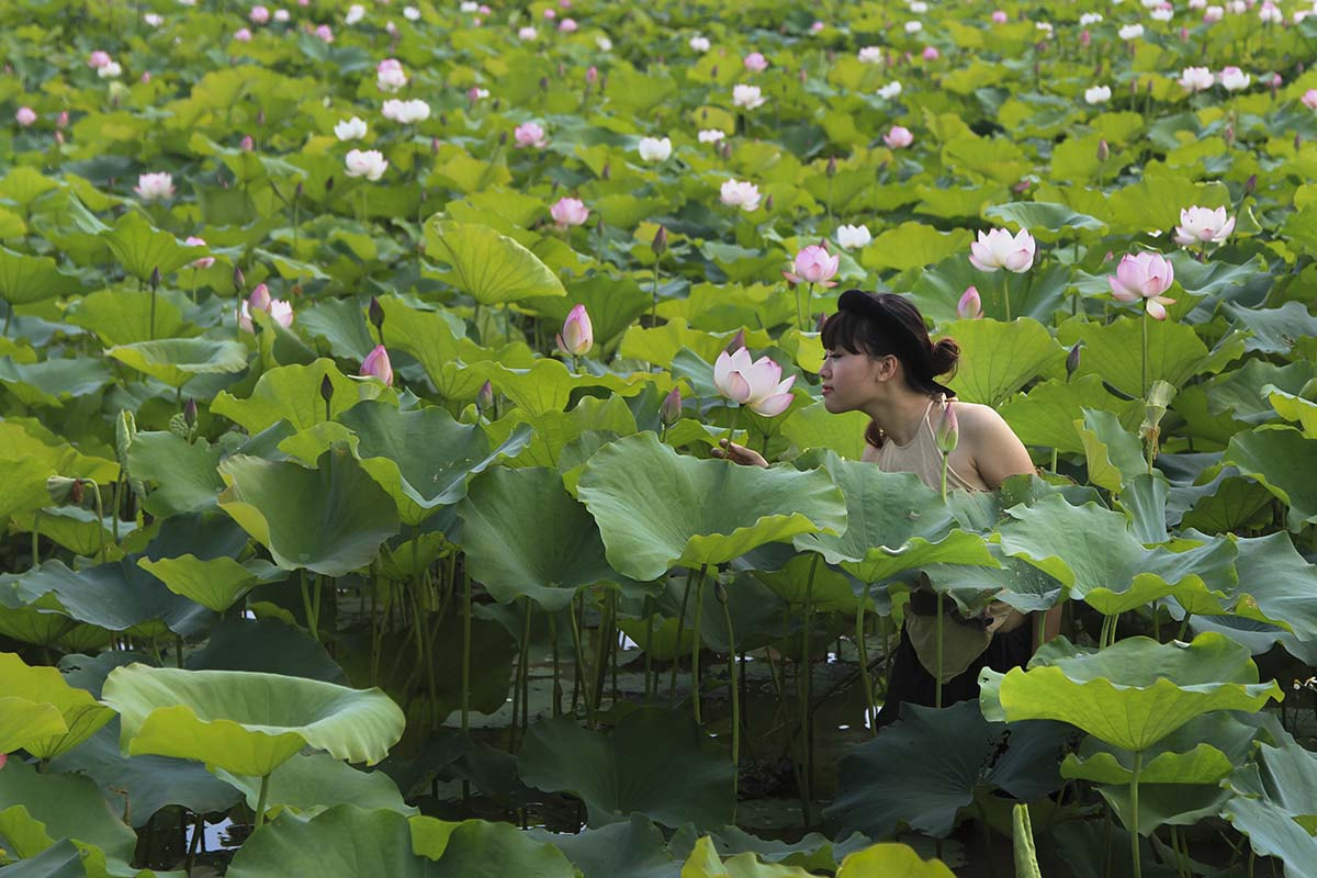 Photograph Lotus & Woman. by Tuan Nguyen Anh on 500px