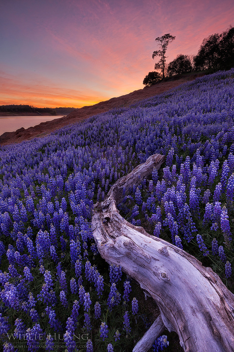 Photograph Purple Magic by Willie Huang on 500px