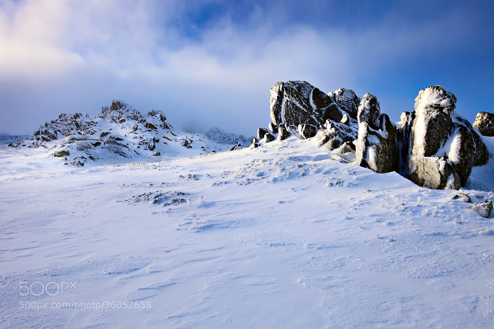 Photograph Frozen Warriors by Tim Donnelly on 500px