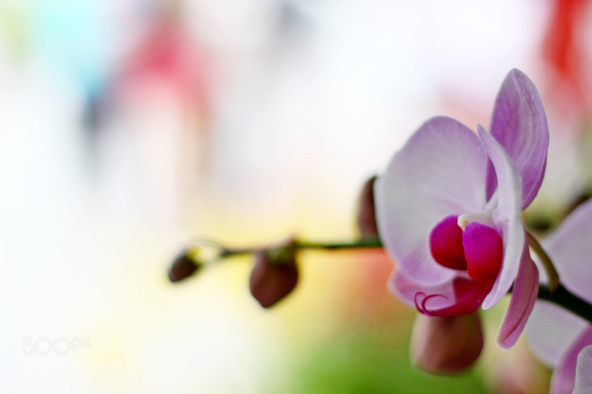 Photograph blooming by lay heong Tan on 500px